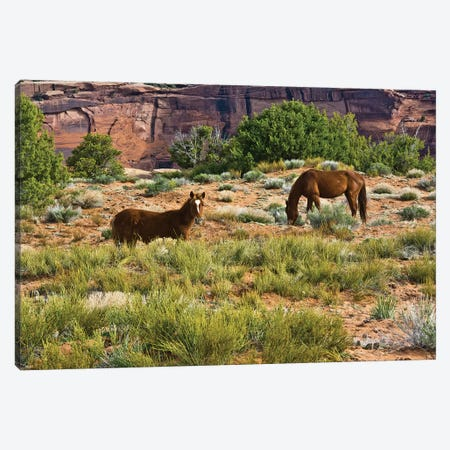 Indian ponies, free range, Canyon de Chelly, National Monument, Chinle, USA Canvas Print #MHE15} by Michel Hersen Canvas Art