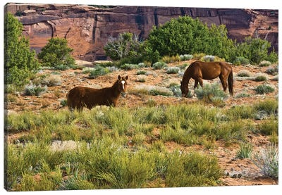 Indian ponies, free range, Canyon de Chelly, National Monument, Chinle, USA Canvas Art Print