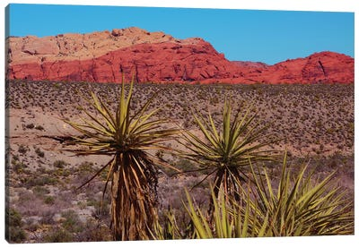Soaptree yucca and Red Rock Canyon National Conservation Area, Nevada, USA. Canvas Art Print