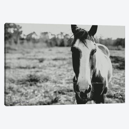 Friendly Horse    Canvas Print #MHL10} by Melissa Hanley Canvas Artwork
