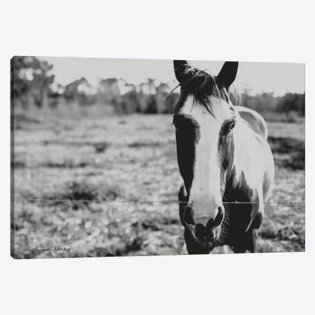 Friendly Horse    Canvas Print #MHL10} by Melissa Hanley Canvas Artwork