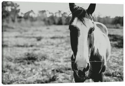 Friendly Horse    Canvas Art Print