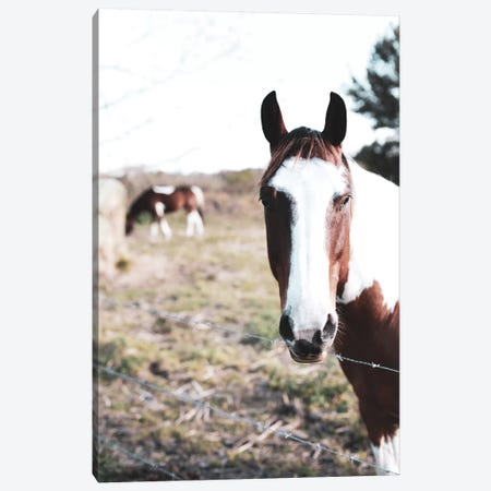 Front & Center      Canvas Print #MHL11} by Melissa Hanley Canvas Artwork