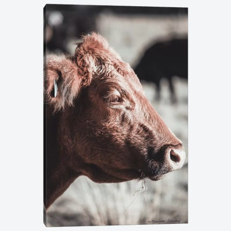 Hungry Cow    Canvas Print #MHL14} by Melissa Hanley Canvas Print