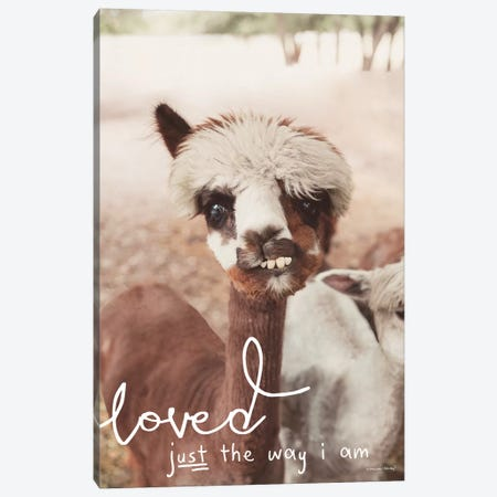 Inquisitive Alpaca     Canvas Print #MHL15} by Melissa Hanley Art Print