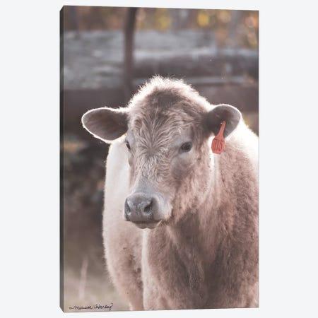 Portrait of a Cow     Canvas Print #MHL18} by Melissa Hanley Canvas Wall Art
