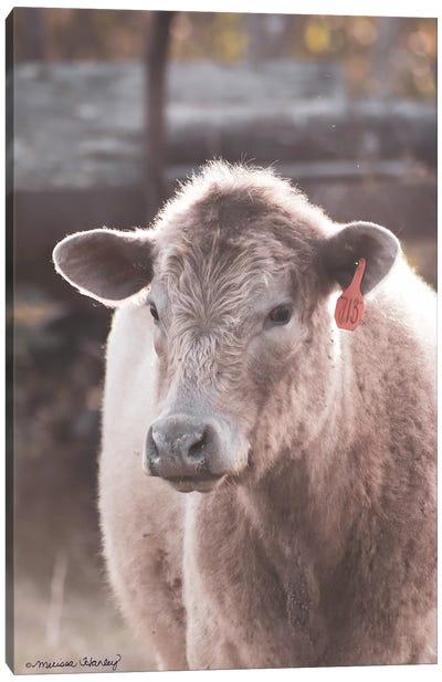 Portrait of a Cow     Canvas Art Print
