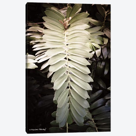 Sunkissed Fern   Canvas Print #MHL1} by Melissa Hanley Canvas Wall Art