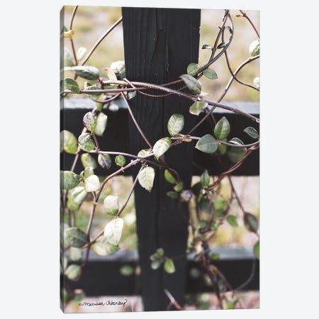 Fence Vine Canvas Print #MHL22} by Melissa Hanley Art Print