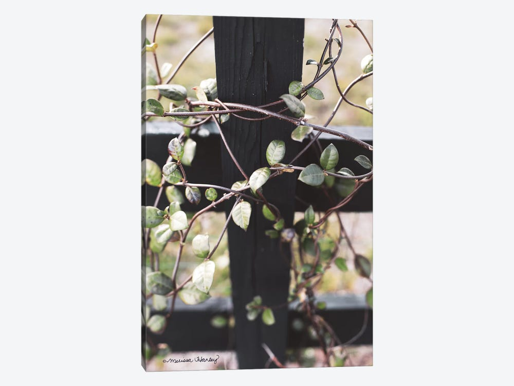 Fence Vine by Melissa Hanley 1-piece Canvas Wall Art