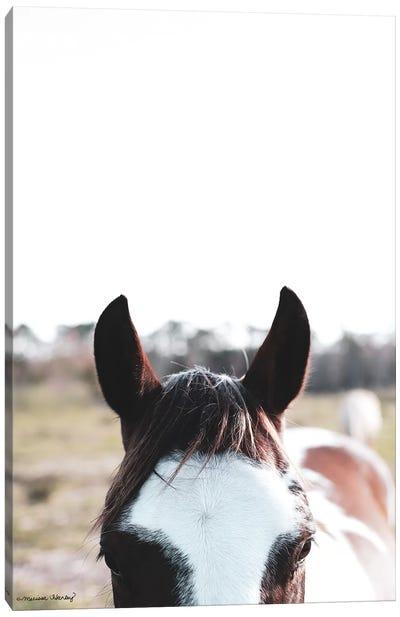 Peek-A-Boo Horse Canvas Art Print