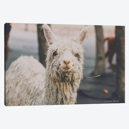Shabby Alpaca Canvas Print #MHL24} by Melissa Hanley Canvas Wall Art