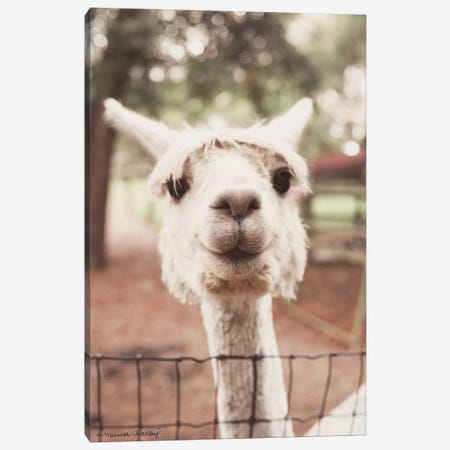 Smiling Alpaca Canvas Print #MHL25} by Melissa Hanley Canvas Art
