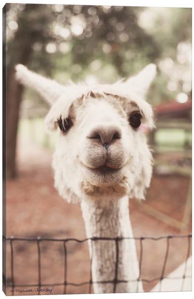 Smiling Alpaca Canvas Art Print