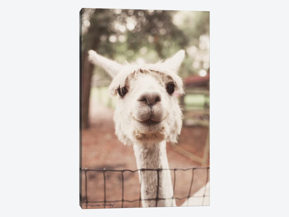 Smiling Alpaca by Melissa Hanley 1-piece Art Print