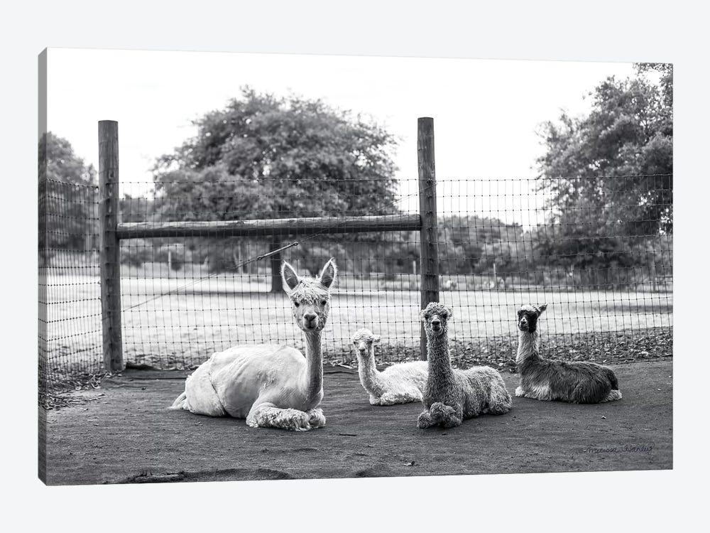 Alpaca Family     by Melissa Hanley 1-piece Canvas Print