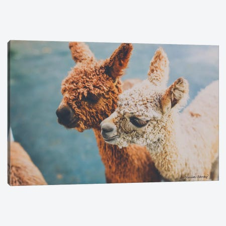 Baby Alpacas     Canvas Print #MHL3} by Melissa Hanley Canvas Artwork