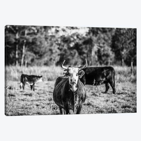 Black & White Steer Canvas Print #MHL4} by Melissa Hanley Canvas Print