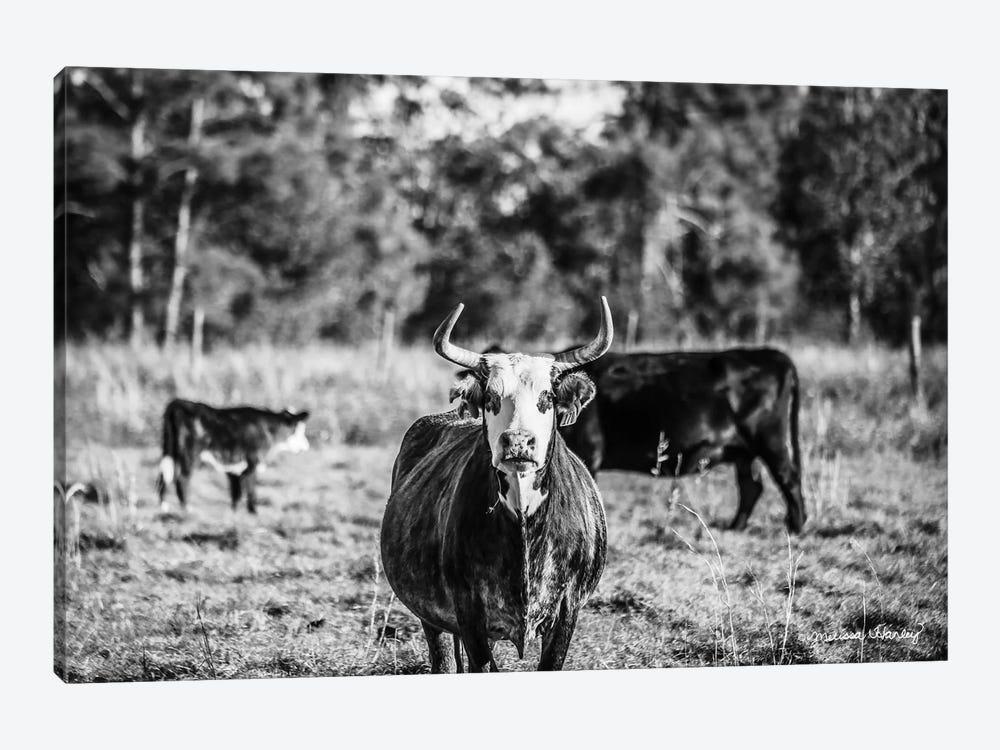 Black & White Steer by Melissa Hanley 1-piece Canvas Print