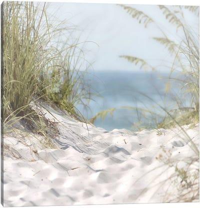 Over The Coastal Dune Canvas Art Print