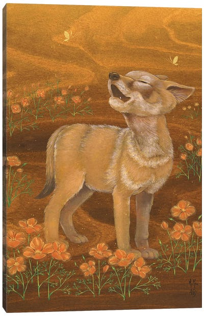 Coyote And Poppies Canvas Art Print