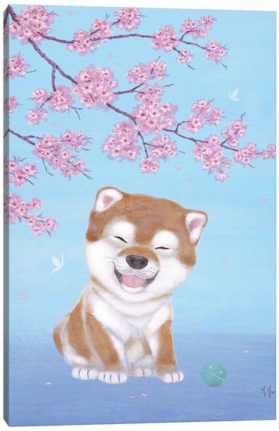 Shiba and Cherry Blossoms  Canvas Art Print