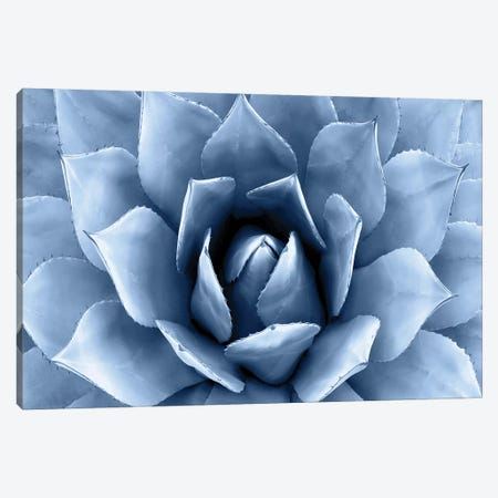 Indigo Succulent II Canvas Print #MIA10} by Mia Jensen Canvas Artwork