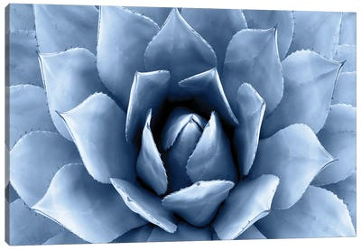 Indigo Succulent II Canvas Art Print
