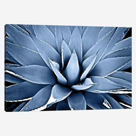 Indigo Succulent III Canvas Print #MIA11} by Mia Jensen Canvas Art