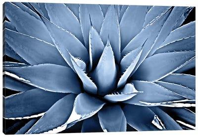 Indigo Succulent III Canvas Art Print