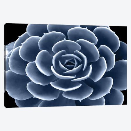 Indigo Succulent IV Canvas Print #MIA12} by Mia Jensen Canvas Artwork