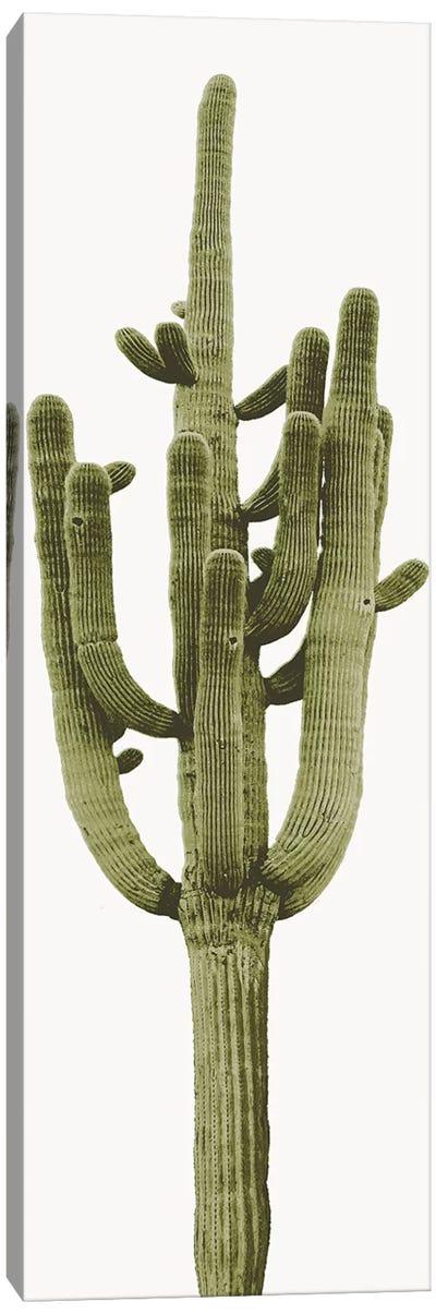 Saguaro Cactus II Canvas Art Print