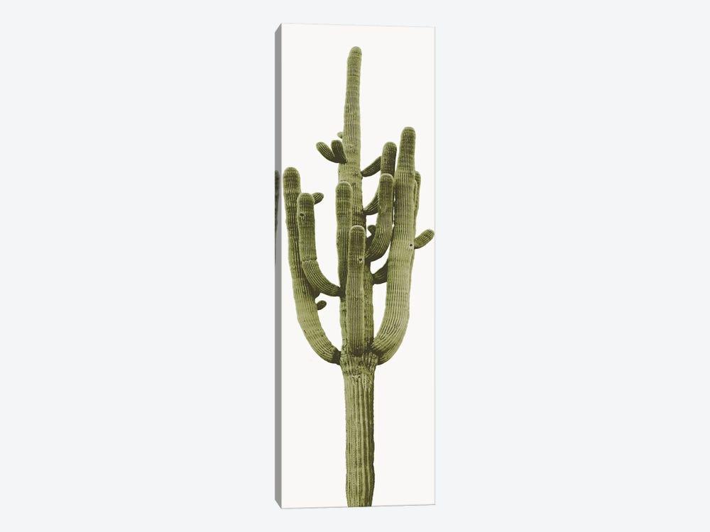 Saguaro Cactus II by Mia Jensen 1-piece Canvas Art