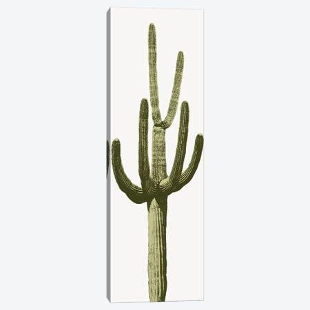 Saguaro Cactus III Canvas Print #MIA15} by Mia Jensen Art Print