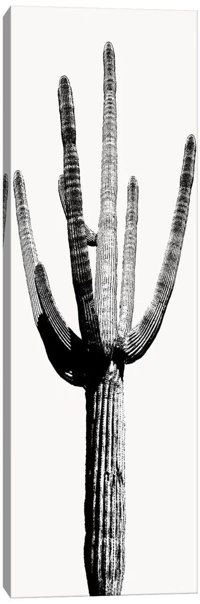 Black & White Saguaro Cactus I Canvas Art Print