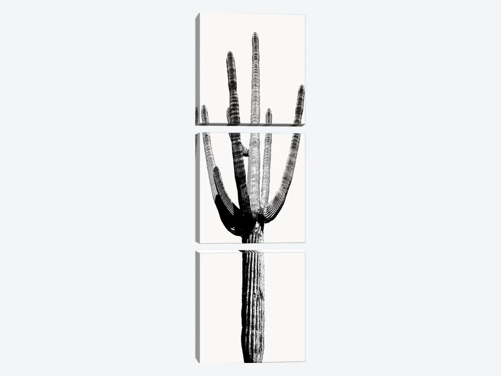 Black & White Saguaro Cactus I by Mia Jensen 3-piece Canvas Artwork