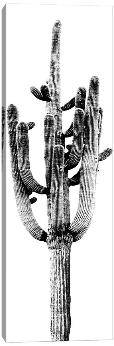Black & White Saguaro Cactus II Canvas Art Print