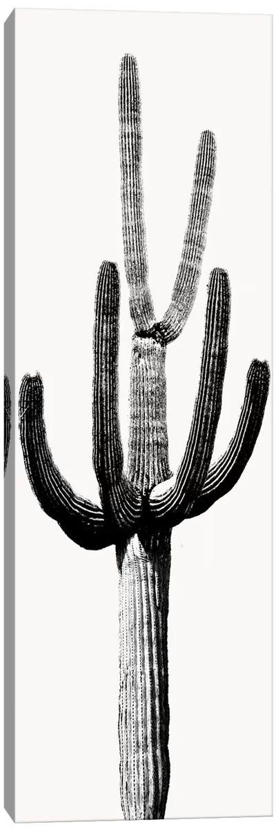 Black & White Saguaro Cactus III Canvas Art Print