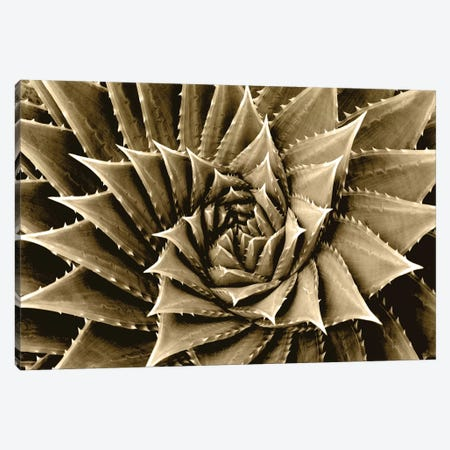 Taupe Succulent I Canvas Print #MIA19} by Mia Jensen Canvas Art