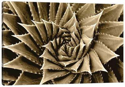 Taupe Succulent I Canvas Art Print