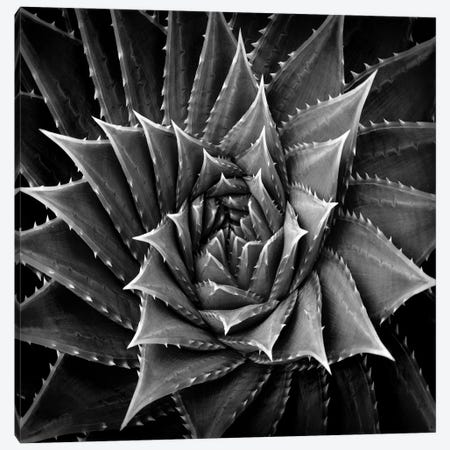 Black & White Succulent I Canvas Print #MIA1} by Mia Jensen Canvas Art