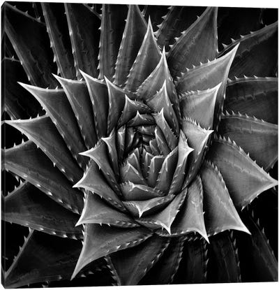 Black & White Succulent I Canvas Art Print