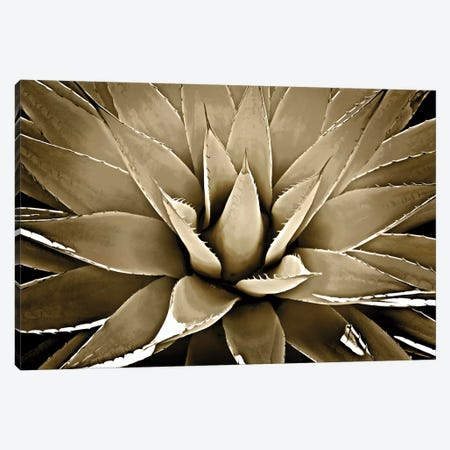 Taupe Succulent III Canvas Print #MIA21} by Mia Jensen Canvas Print