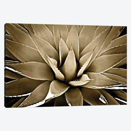 Taupe Succulent III Canvas Print #MIA21} by Mia Jensen Canvas Print