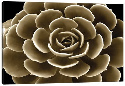 Taupe Succulent IV Canvas Art Print