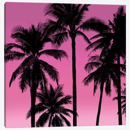 Palms Black on Pink I Canvas Print #MIA27} by Mia Jensen Canvas Art