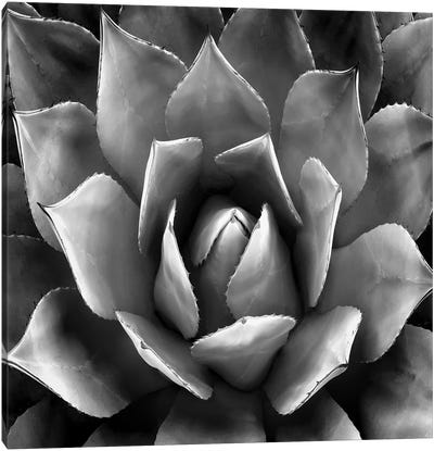 Black & White Succulent II Canvas Art Print