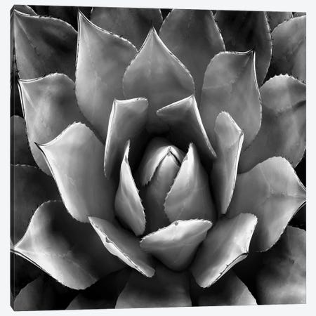 Black & White Succulent II Canvas Print #MIA2} by Mia Jensen Canvas Artwork