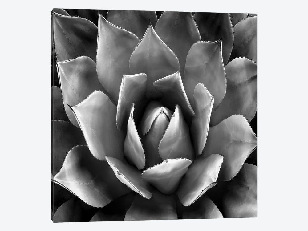 Black & White Succulent II by Mia Jensen 1-piece Canvas Print