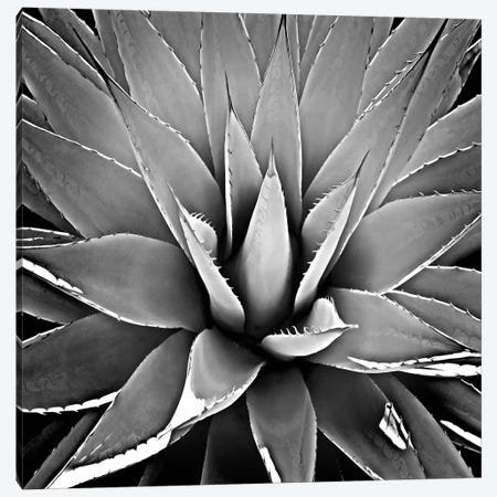 Black & White Succulent III Canvas Print #MIA3} by Mia Jensen Canvas Artwork
